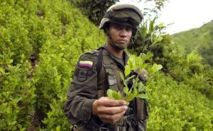 An anti-narcotics policeman shows an illegal coca plant in Tolima, Colombia (source: dpa)